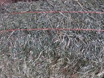 Alfalfa and grass hay in Alamogordo, New Mexico