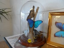 BUTTERFLY COLLECTION OF 7 (TAXIDERMY) AND SEALED DISPLAY in Cherry Point, North Carolina