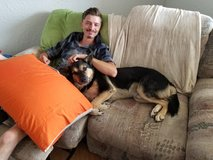 lost two dogs in Alamogordo, New Mexico