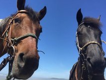 Full Care Horse Boarding in Tacoma in Fort Lewis, Washington