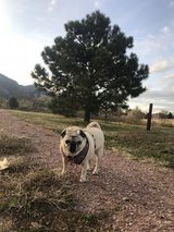 Pet Sitter Wanted in Fort Irwin, California