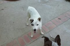 max needs a good loving home in Yucca Valley, California
