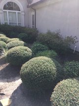 Lawn, Mulch, and Tree Services in Spring, Texas