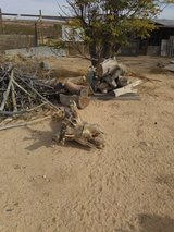 More Free wood in Yucca Valley, California