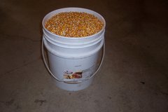 5 GALLON BUCKETS OF FEED CORN in Naperville, Illinois