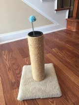 Cat Scratching Post in Byron, Georgia
