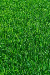 Does your lawn need some TLC? Let us help you get that BEAUTIFUL green grass you've always wanted! in Kingwood, Texas