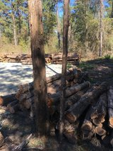Cedar Fence Posts for sale in Livingston, Texas