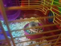 Hamster with cage in Leesville, Louisiana
