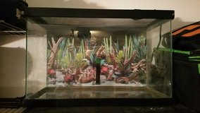 10 Gallon Reptile Tank with heating pad on side in Yucca Valley, California