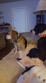 LOST FAMILY PETS PLEASE HELP !! in Fort Campbell, Kentucky