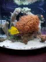 12 gallon nano cube Dx saltwater fishtank in Leesville, Louisiana