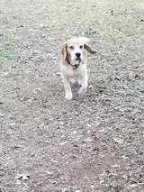 need to rehome in Fort Hood, Texas