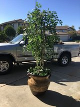 New Large flower in Travis AFB, California