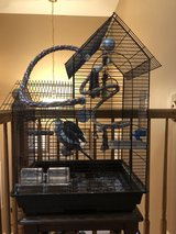 Two Cockatiels with cage /accessories in Orland Park, Illinois