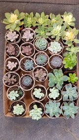 $1 succulents and arrangements at lower prices than elsewhere in Camp Pendleton, California