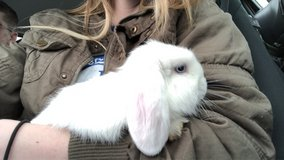 bunny rabbit in Fort Campbell, Kentucky
