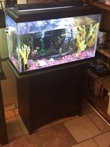 35 gallon freshwater aquarium in Lawton, Oklahoma
