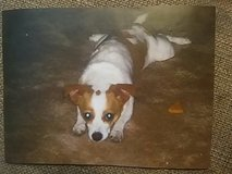 Doggies R Us in Glendale Heights, Illinois
