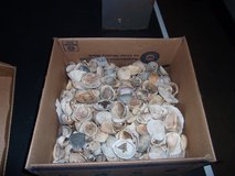 Box o'Shells in Perry, Georgia