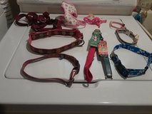 Dog collars & harnesses in St. Charles, Illinois