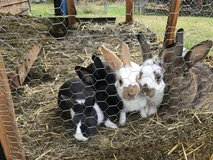 Cute bunnies in Fort Lewis, Washington