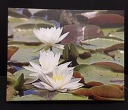 11X14 Lily on Canvas in Cherry Point, North Carolina