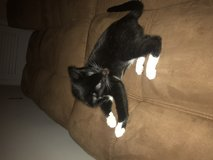 4 month old Kitten in need of great loving home in Norfolk, Virginia
