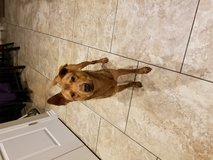 Found dog off of Bunny Trail in Fort Hood, Texas