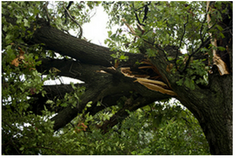 cheap tree work ,brush removal in Beaufort, South Carolina