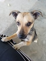 free puppy to a good home. in Travis AFB, California