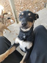 free puppy to a good home in Travis AFB, California