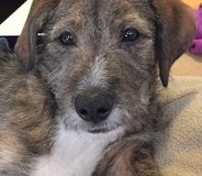Flash is in need of a forever home in Camp Pendleton, California