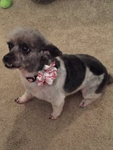 Zoey is looking for a new home in Fort Gordon, Georgia