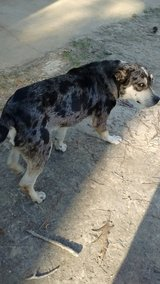 Dog found Marlow/Drakes fork rd in Leesville, Louisiana