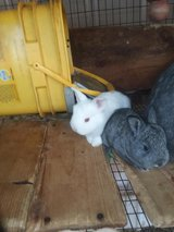 little rabbits in Lawton, Oklahoma