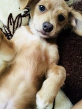 Puppy to a good home in Travis AFB, California