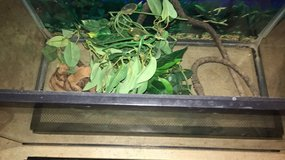 10 gallon reptile tank with light in Plainfield, Illinois