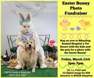 Pet photos with Easter Bunny! in Schaumburg, Illinois
