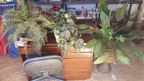 fake plants in Yucca Valley, California