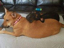 Rehoming  2 dogs in Baytown, Texas