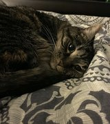 Cat needs a new home in Fort Meade, Maryland