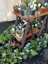 Beautiful succulents in a large variety (open all 7 days) in Camp Pendleton, California