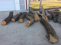 Wanted Osage orange hedge apple trunks in Orland Park, Illinois