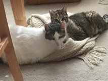 Mother and Son Kitties Need a New Home in Fairfield, California