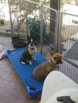 Raised dog bed/ child cot in Yucca Valley, California