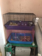 2 guinea pigs with supplies in Perry, Georgia