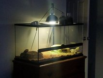 Bearded dragons male/female with cage/accessories/lighting in Kingwood, Texas