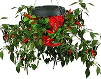 Topsy Turvy Hot Pepper Planter (new) in Ramstein, Germany