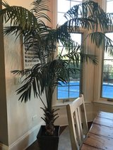 Artificial Palm Tree in St. Charles, Illinois